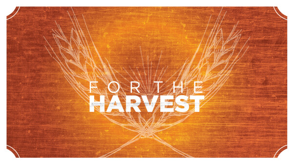 Series: For The Harvest
