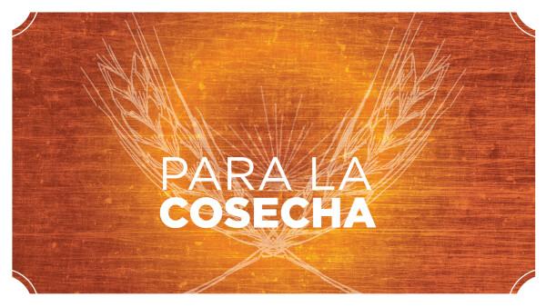Series: Para La Cosecha
